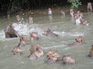 קופים שוחים