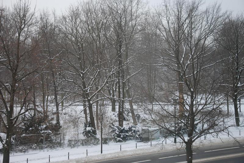 טיגרטן בשלג.jpg