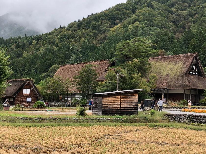 גגות קש ושדות אורז